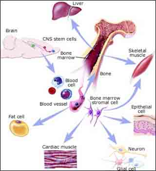 Social Studies of Bioscience and Biotech course image