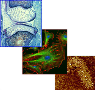 Molecular, Cellular, and Tissue Biomechanics course image