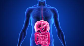 Introduction to the Human Digestive System course image