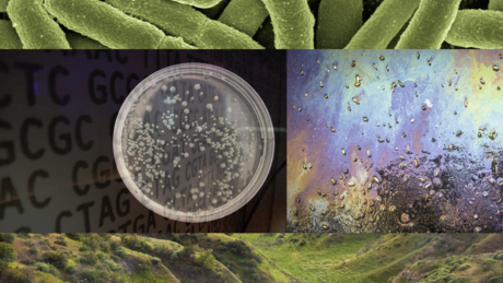 Engineering Life: Synbio, Bioethics & Public Policy course image