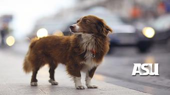 Dog Behavior: Problems and Solutions course image