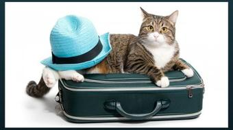 How to Travel the World as a Pet Sitter course image