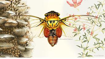 Drawing Nature, Science and Culture: Natural History Illustration  course image