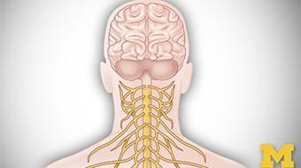 Anatomy: Human Neuroanatomy course image