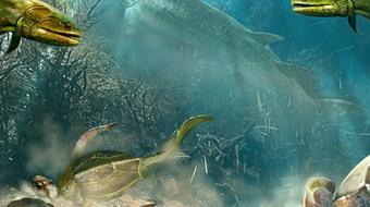 Paleontology: Early Vertebrate Evolution course image