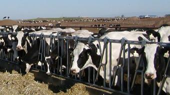 Dairy Production and Management course image