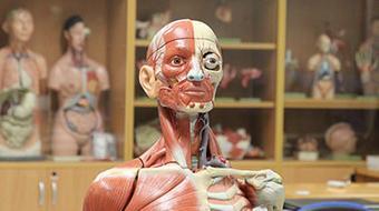 Human Anatomy course image