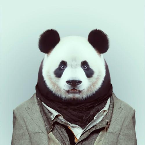 Kaidong Shen profile image